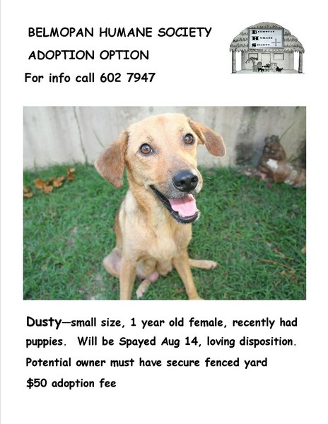4 dogs and one kitten up for adoption