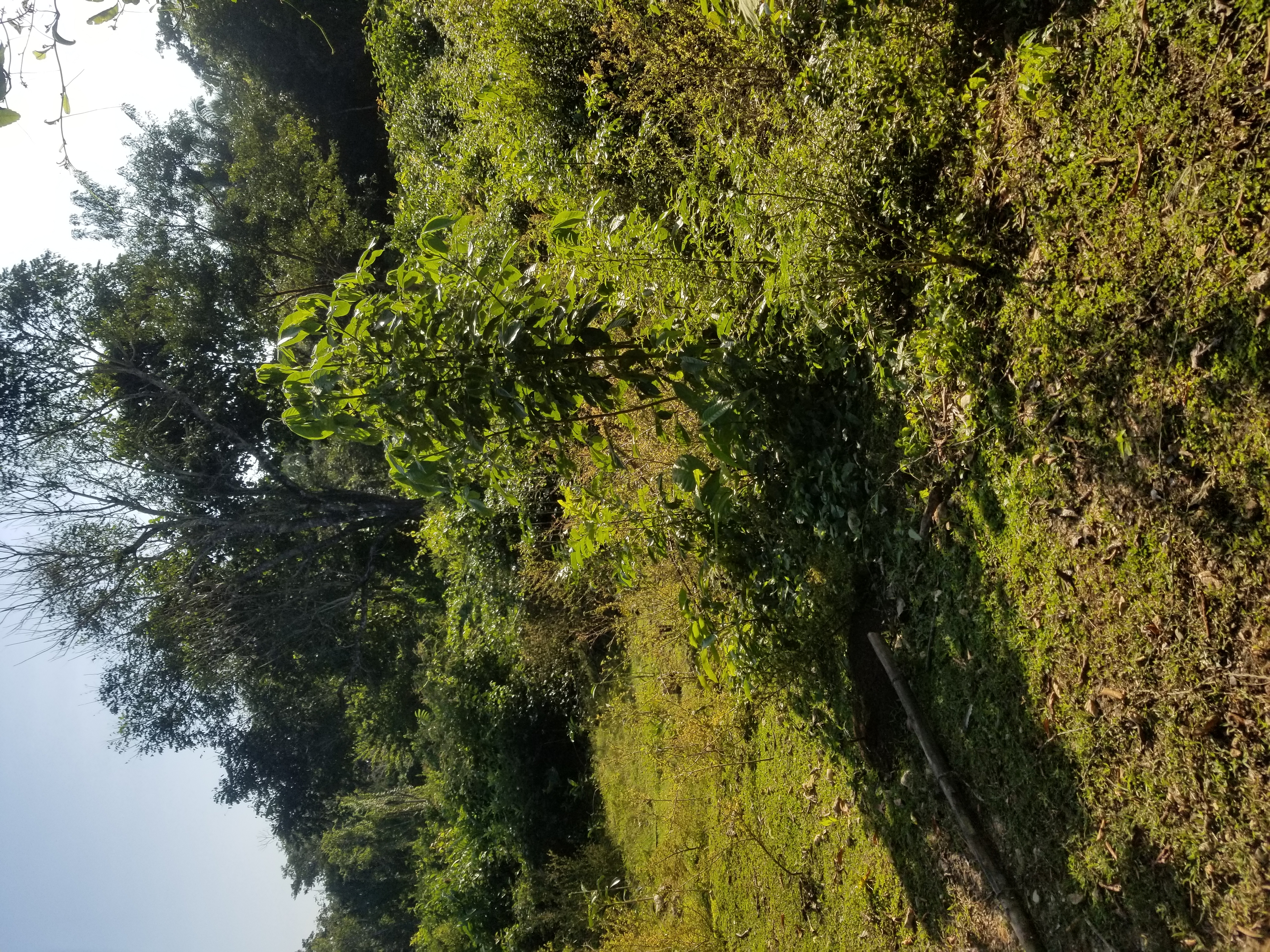 Lot for Sale in Teakettle, Cayo