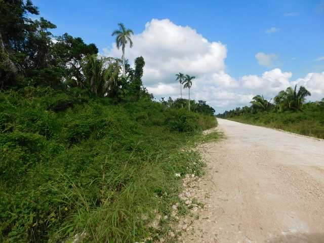 FARM LAND FOR SALE WITH WATER CREEK, VALLEY OF PEACE ROAD, CAYO DISTRICT, BELIZE, CENTRAL AMERICA.